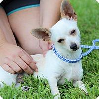 Adopt A Pet :: Hodges - Conroe, TX