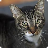 Adopt A Pet :: *Lilly* - Philadelphia, PA