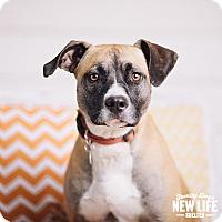 Adopt A Pet :: Jo - Portland, OR