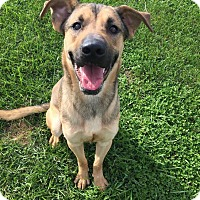 Adopt A Pet :: Cooper - Xenia, OH