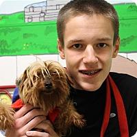 Adopt A Pet :: Tina Fey - Elyria, OH