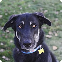 Adopt A Pet :: Cienna - Salt Lake City, UT