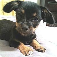Adopt A Pet :: Fay - Tijeras, NM