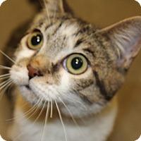 Adopt A Pet :: Villa - San Leandro, CA