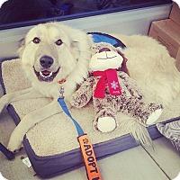 Adopt A Pet :: Hunter - greenville, SC