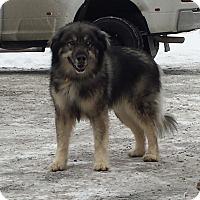 Adopt A Pet :: Kenai - Priest River, ID