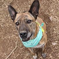 Adopt A Pet :: Remy - Ijamsville, MD