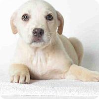 Adopt A Pet :: MISSY - Ukiah, CA