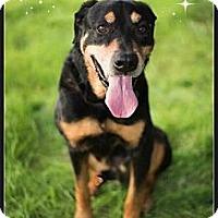 Adopt A Pet :: Jordy - Scottsdale, AZ