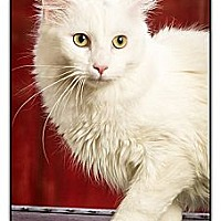 Adopt A Pet :: Dutch - Owensboro, KY