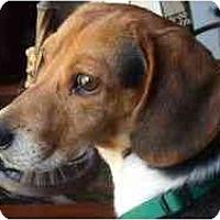 Adopt A Pet :: John - Novi, MI