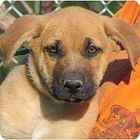 Adopt A Pet :: Loki - Providence, RI