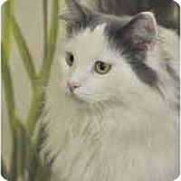 Adopt A Pet :: Stewie - Arlington, VA