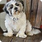 Adopt A Pet :: Pudgie