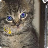 Adopt A Pet :: Lizzie - Reston, VA