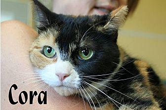 Calico Cat for adoption in Wichita Falls, Texas - Cora