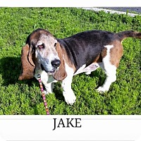 Adopt A Pet :: Jake - Littleton, CO