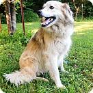 Adopt A Pet :: SWEET SAGE