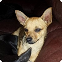 Adopt A Pet :: Argyle - Mesa, AZ