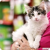 Adopt A Pet :: Tasha - Westchester, CA