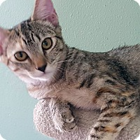 Adopt A Pet :: Priscilla - Pasadena, CA