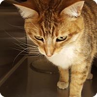Adopt A Pet :: Tyson - Ortonville, MI