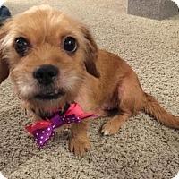 Adopt A Pet :: Salsa - Houston, TX
