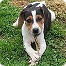 Adopt A Pet :: Josie