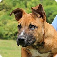 Adopt A Pet :: Magnum~adopted! - Glastonbury, CT