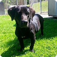 Adopt A Pet :: EARL - Cadiz, OH