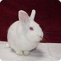 Adopt A Pet :: Snowdrop - Montclair, CA
