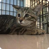 Adopt A Pet :: Mush (semi-feral) - Ann Arbor, MI