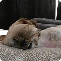 Adopt A Pet :: Kaylee - Willingboro, NJ