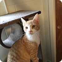 Adopt A Pet :: Chloe - Butner, NC