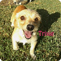 Adopt A Pet :: Trixie - El Cajon, CA