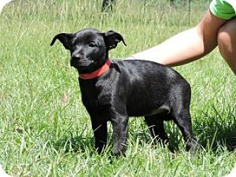 Labrador Retriever/Hound (Unknown Type) Mix Puppy for adoption in Berkeley Heights, New Jersey - Louise