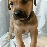 Adopt A Pet :: Cosmo - Georgetown, SC
