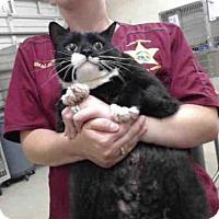 Adopt A Pet :: SUPER MARIO - Tavares, FL
