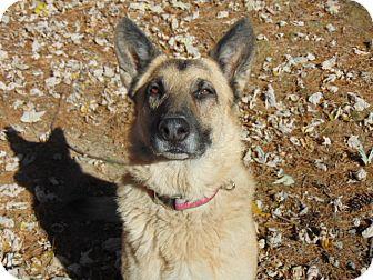German Shepherd Dog Mix Dog for adoption in Nashua, New Hampshire - Karma