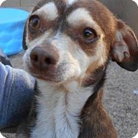Adopt A Pet :: Skysong - Glendale, AZ
