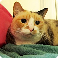 Adopt A Pet :: Amelia - Eastsound, WA