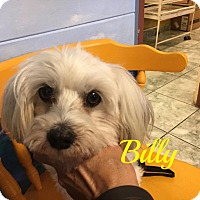Adopt A Pet :: Billy - Maitland, FL