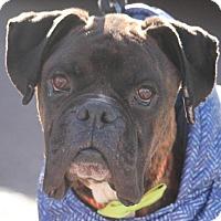 Adopt A Pet :: Paulie - Denver, CO