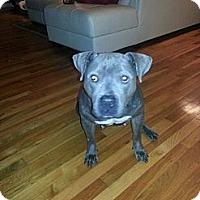 Adopt A Pet :: Cookie - East McKeesport, PA