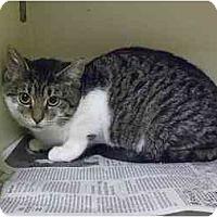Adopt A Pet :: Appleonia - Lombard, IL