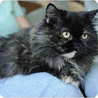 Adopt A Pet :: Tonya - Columbus, OH