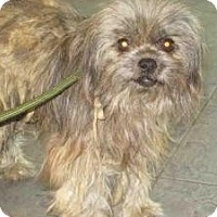 Adopt A Pet :: Nicky - Encino, CA