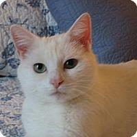 Adopt A Pet :: LULU - 2014 - Hamilton, NJ