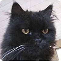 Adopt A Pet :: Diego - Davis, CA