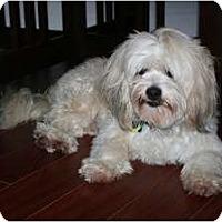 Adopt A Pet :: Jackson - I love to swim! - Vancouver, BC